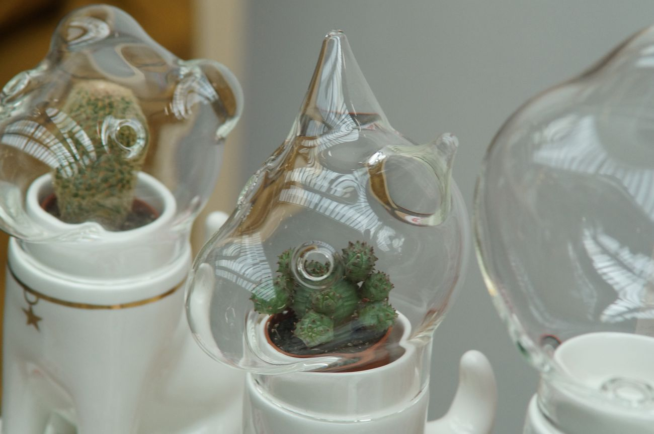Ceramics_glass