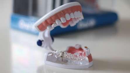 Oral B Typodonts